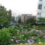 flowers_in_San_francisco