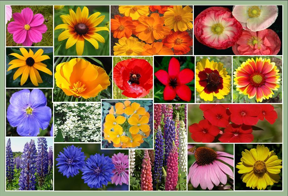 Flower_Seed-packs